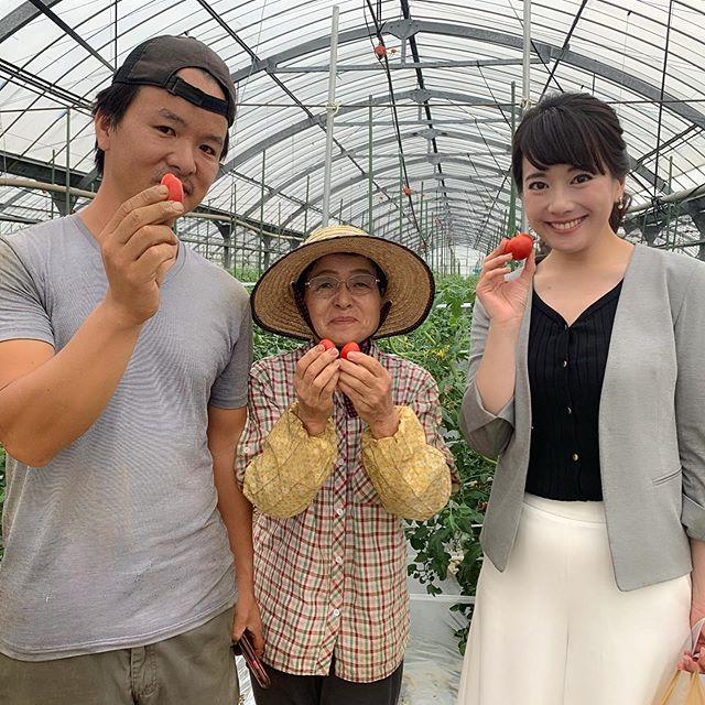 松尾さんのトマト☆ 『消費税増税から1週間』。昨日は福岡県内の様々な現場をお伝えしました。その中で、宗像市でフルーツトマトを育てる『とまとのまつお』さんを取材させていただきました。ハウスの温度を保つ機械に使う重油や車のガソリン代にももちろん消費税がかかるし、肥料代や資材代など、消費税2%の値上げは、やはり大きいそうです。でも、だからと言って、消費者のことを考えると、トマトの値段は簡単には上げられない。トマトは大体これくらいっていうイメージもあるし、何より子供たちにもたくさん美味しくトマトを食べて欲しい、、、という思いがあるそうです。生産の現場にも痛みが出ている消費税増税。増税した分を、しっかり国民が納得できる形で使って欲しい、それなら厳しいけど、いた仕方ないとおっしゃっていました。納得できる使い道。国民に負わせる負担を、国民が豊かになるように使っていただきたいと、切に願います。また、消費者の私たちも、生産の現場を守るために、少しのトマトの値上げは、理解を示しても良いのではないでしょうか(^-^) まつおさんのトマト、とーーーーっても甘くてフルーツみたいに美味しかったですよ(^-^)☆お母さまも笑顔が素敵な方で、愛情たっぷりトマトでした!ありがとうございました☆#ももち浜s特報ライブ #消費税増税#宗像市 #宗像 #とまとのまつお#松尾さん#フルーツトマト #とまと#トマト#ありがとうございました